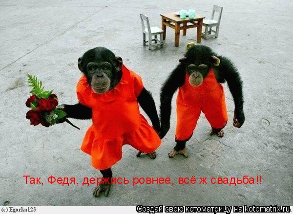 Котоматрица: Так, Федя, держись ровнее, всё ж свадьба!!