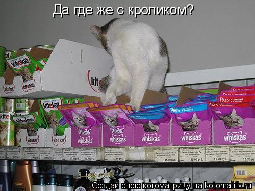 Котоматрица: Да где же с кроликом?