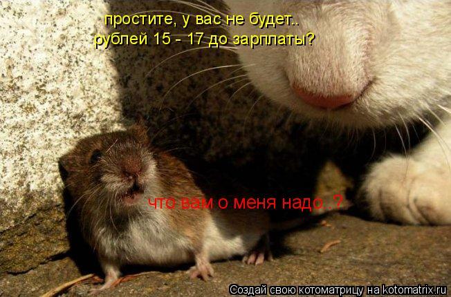 Котоматрица: что вам о меня надо..? простите, у вас не будет.. рублей 15 - 17 до зарплаты?