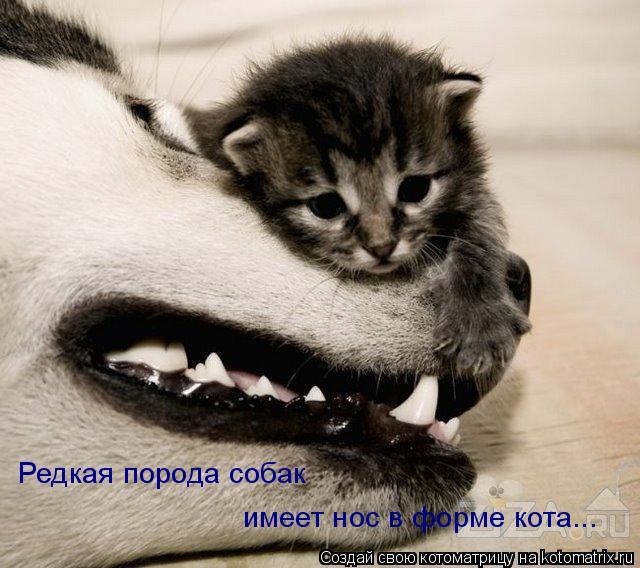 Котоматрица: Редкая порода собак имеет нос в форме кота...
