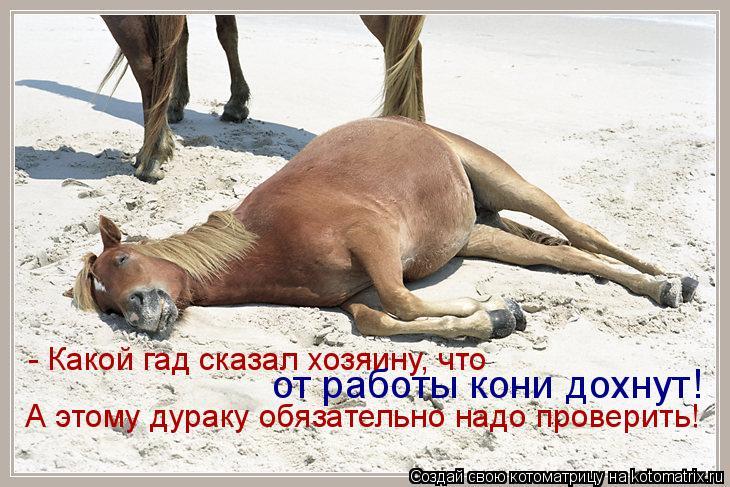 Котоматрица: - Какой гад сказал хозяину, что от работы кони дохнут! А этому дураку обязательно надо проверить!