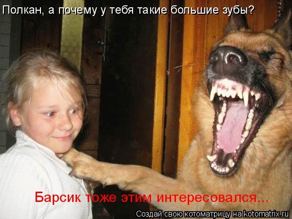 Котоматрица: Полкан, а почему у тебя такие большие зубы? Барсик тоже этим интересовался...
