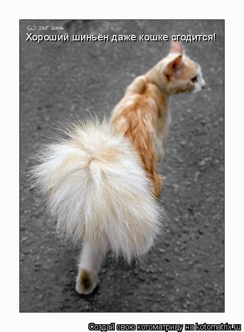 Котоматрица: Хороший шиньён даже кошке сгодится!