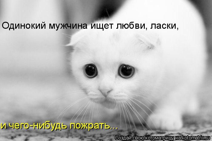 Котоматрица: Одинокий мужчина ищет любви, ласки, и чего-нибудь пожрать...