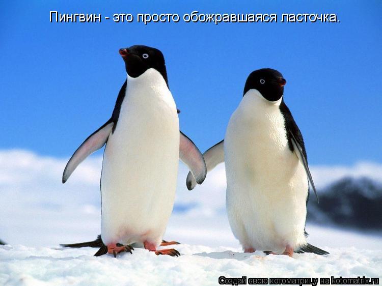 Котоматрица: Пингвин - это просто обожравшаяся ласточка.