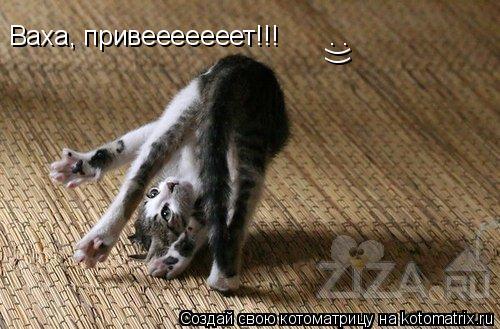 Котоматрица: Ваха, привееееееет!!! :))