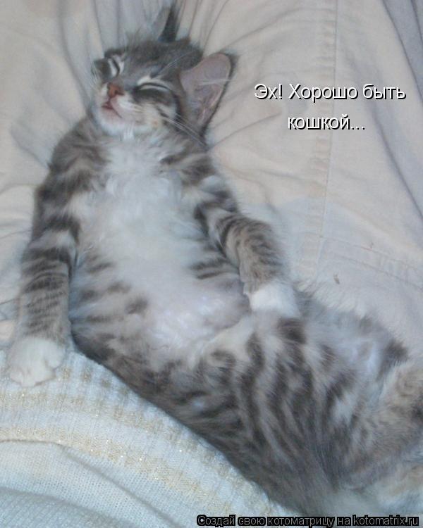 Котоматрица: Эх! Хорошо быть кошкой...