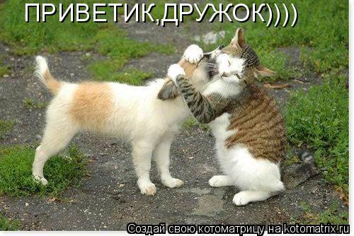 Котоматрица: ПРИВЕТИК,ДРУЖОК))))