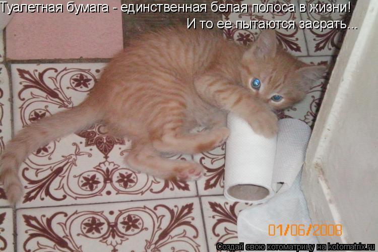 Котоматрица: Туалетная бумага - единственная белая полоса в жизни! И то ее пытаются засрать...