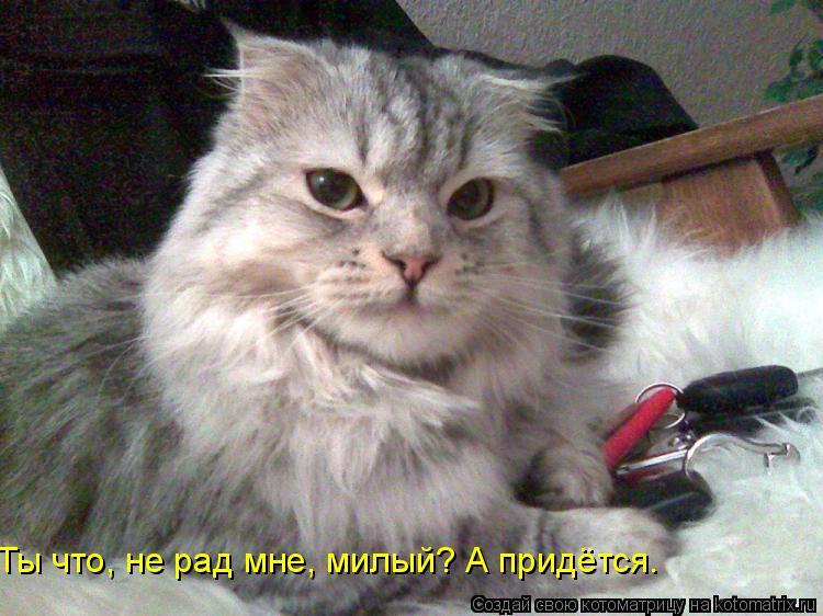 Котоматрица: Ты что, не рад мне, милый? А придётся.
