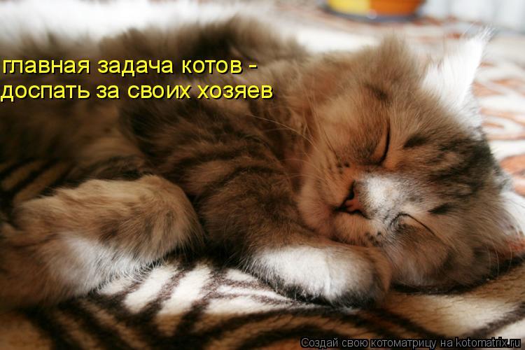 Котоматрица: главная задача котов - доспать за своих хозяев