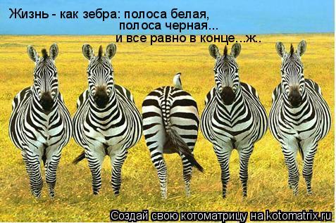 Котоматрица: Жизнь - как зебра: полоса белая,  полоса черная... и все равно в конце...ж..