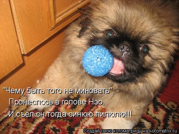 """Котоматрица: """"Чему быть того не миновать"""", - Пронеслось в голове Нэо, И съел он тогда синюю пилюлю!!!"""