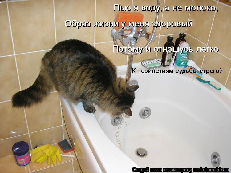 Котоматрица: Пью я воду, а не молоко,  Образ жизни у меня здоровый Потому и отношусь легко  К перипетиям судьбы строгой