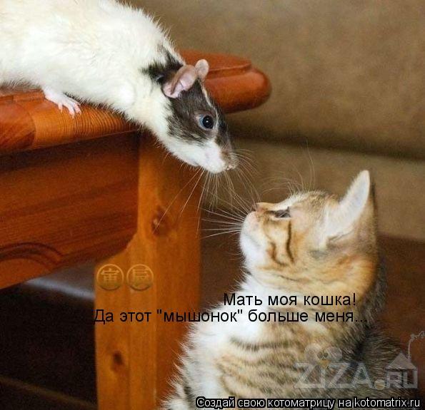 """Котоматрица: Мать моя кошка! Да этот """"мышонок"""" больше меня..."""