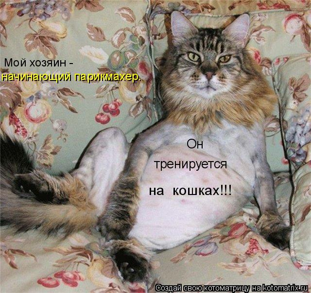 Котоматрица: Мой хозяин -  начинающий парикмахер. Он  тренируется  на  кошках!!!