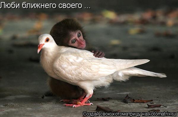 Котоматрица: Люби ближнего своего ...