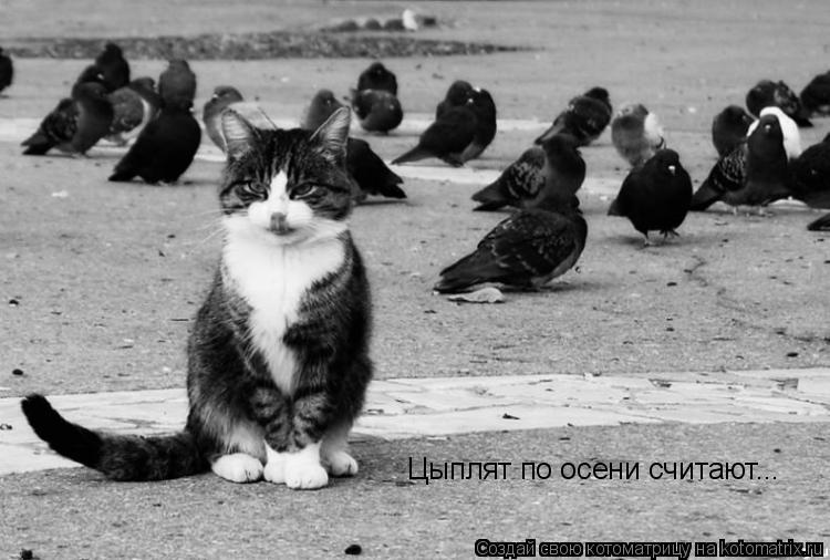 Котоматрица: Цыплят по осени считают...