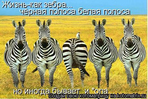 Котоматрица: Жизнь-как зебра... чёрная полоса белая полоса  но иногда бывает  и *опа...