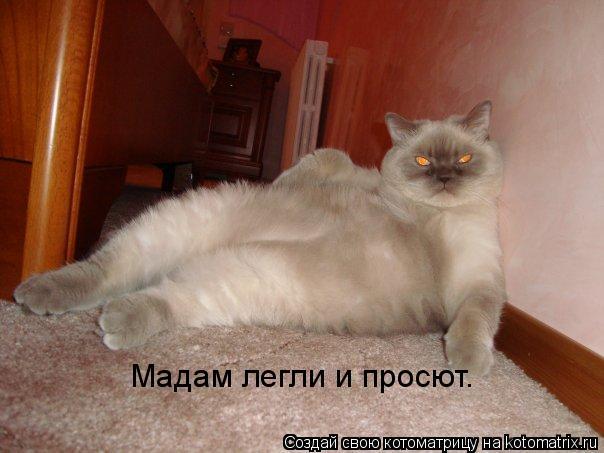 Котоматрица: Мадам легли и просют.