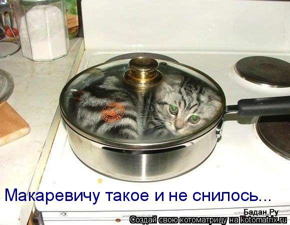 Котоматрица: Макаревичу такое и не снилось...