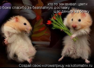 Котоматрица: кто то заказивал цвети о боже спасибо за безплатную доставку щас,деньги на бочку