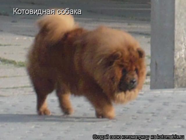 Котоматрица: Котовидная собака
