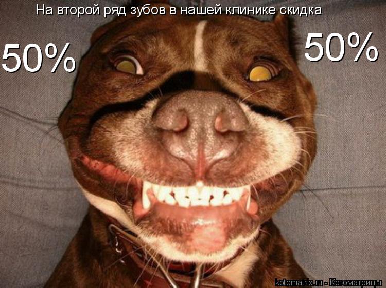 Котоматрица: На второй ряд зубов в нашей клинике скидка 50% 50%