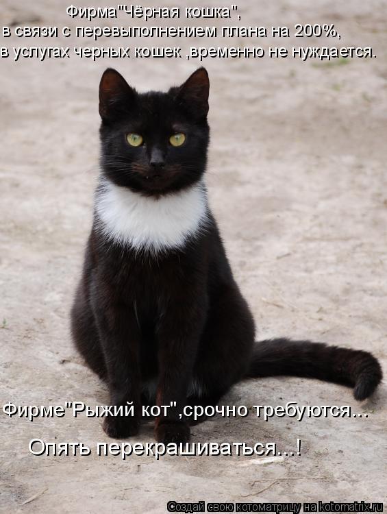 """Котоматрица: Фирма""""Чёрная кошка"""", в связи с перевыполнением плана на 200%, в услугах черных кошек ,временно не нуждается. Фирме""""Рыжий кот"""",срочно требуются.."""
