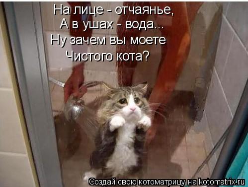 Котоматрица: На лице - отчаянье, А в ушах - вода... Ну зачем вы моете Чистого кота?