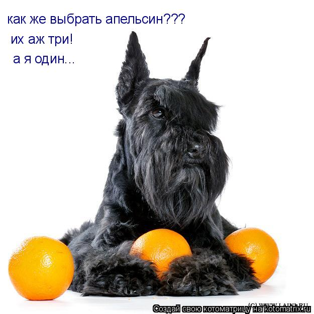Котоматрица: их аж три! как же выбрать апельсин??? а я один...