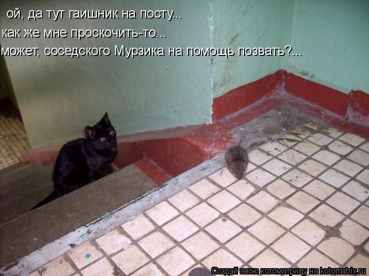 Котоматрица: ой, да тут гаишник на посту... как же мне проскочить-то... может, соседского Мурзика на помощь позвать?...