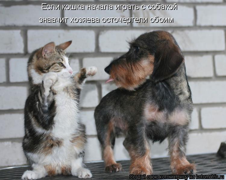 Котоматрица: Если кошка начала играть с собакой знаачит хозяева осточертели обоим