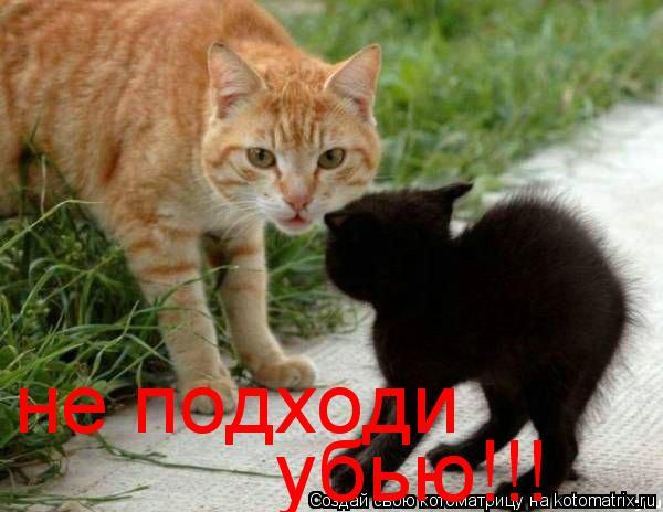 Котоматрица: не подходи убью!!!