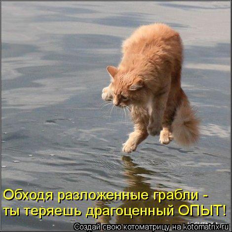 Котоматрица: Обходя разложенные грабли -  ты теряешь драгоценный ОПЫТ!
