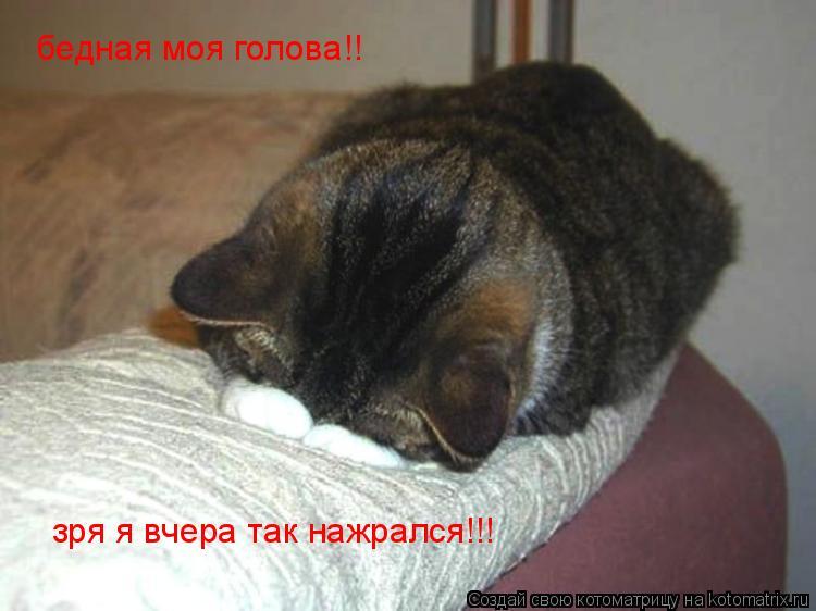 Котоматрица: бедная моя голова!! зря я вчера так нажрался!!!