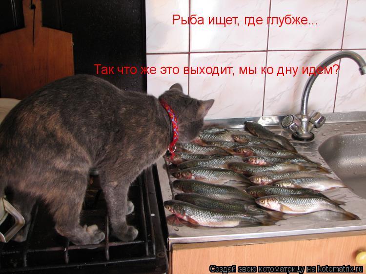 Котоматрица: Рыба ищет, где глубже... Так что же это выходит, мы ко дну идем?
