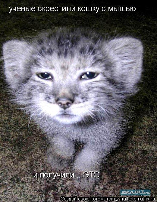 Котоматрица: ученые скрестили кошку с мышью и получили....ЭТО