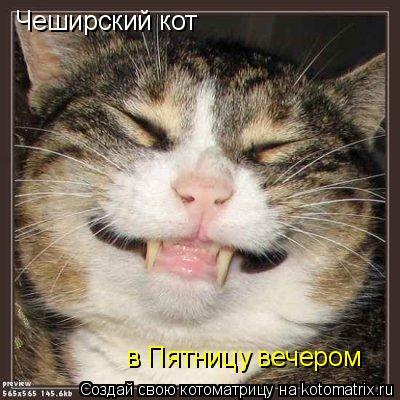 Котоматрица: Чеширский кот  в Пятницу вечером