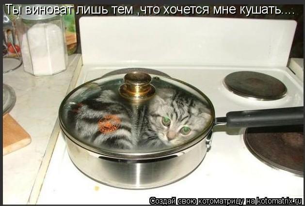 Котоматрица: Ты виноват лишь тем ,что хочется мне кушать....