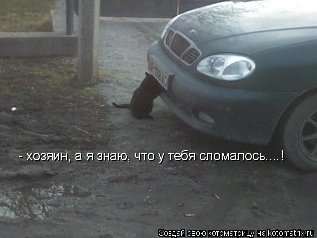 Котоматрица: - хозяин, а я знаю, что у тебя сломалось....!