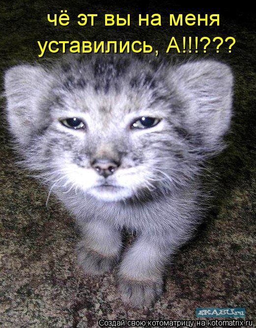 Котоматрица: чё эт вы на меня   уставились, А!!!???