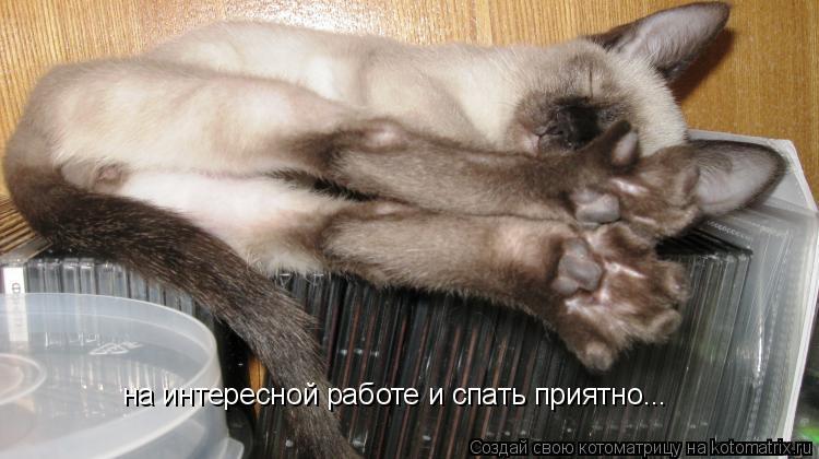 Котоматрица: на интересной работе и спать приятно...