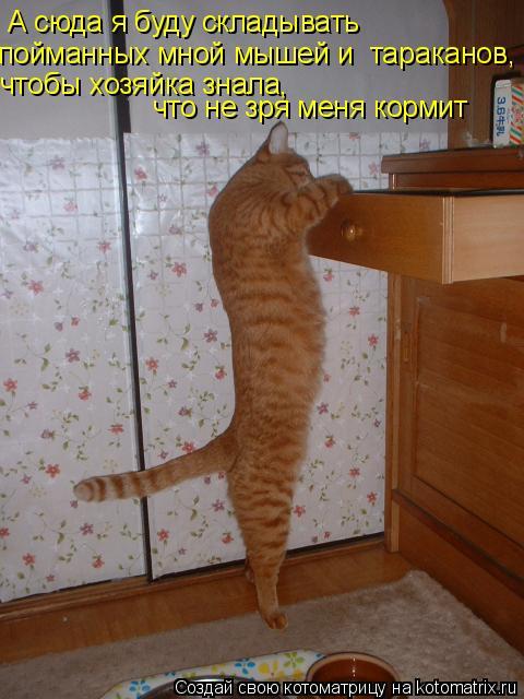 Котоматрица: А сюда я буду складывать  пойманных мной мышей и  тараканов, чтобы хозяйка знала,  что не зря меня кормит