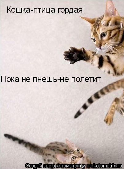 Котоматрица: Кошка-птица гордая! Пока не пнешь-не полетит