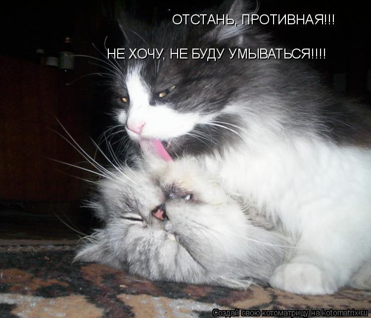 Котоматрица: ОТСТАНЬ, ПРОТИВНАЯ!!! НЕ ХОЧУ, НЕ БУДУ УМЫВАТЬСЯ!!!!