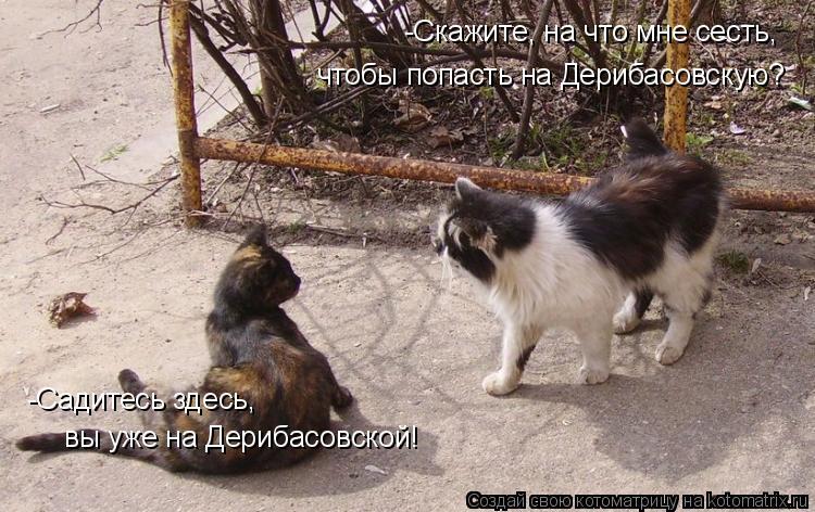 Котоматрица: -Скажите, на что мне сесть, чтобы попасть на Дерибасовскую? -Садитесь здесь,  вы уже на Дерибасовской!