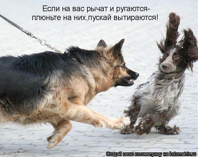 Котоматрица: Если на вас рычат и ругаются- плюньте на них,пускай вытираются!