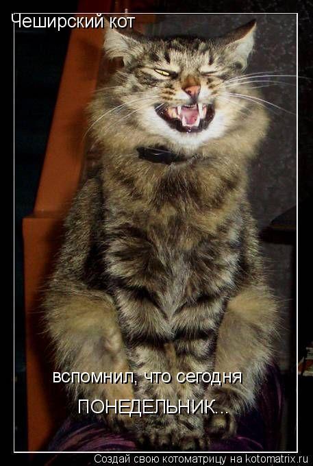 Котоматрица: Чеширский кот вспомнил, что сегодня ПОНЕДЕЛЬНИК...