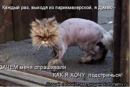 Котоматрица: Каждый раз, выходя из парикмахерской, я думаю -  ЗАЧЕМ меня спрашивали КАК Я ХОЧУ  подстричься!